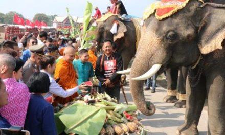 """กรุงเก่า """"พระนครศรีอยุธยา""""จัดยิ่งใหญ่เลี้ยงโต๊ะจีนช้าง 70 เชือก ในวันช้างไทย"""