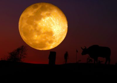ชมกระทิง เย้ยจันทร์ ที่ คลองทราย เขาแผงม้า