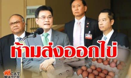 """""""พาณิชย์"""" ประกาศด่วน ห้ามส่งออกไข่ 7 วัน แก้ปัญหาไข่ขาดตลาด"""
