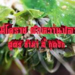 มุมเมนูความอร่อย นั่วหมี่โคราชผักหวานปลาเค็ม